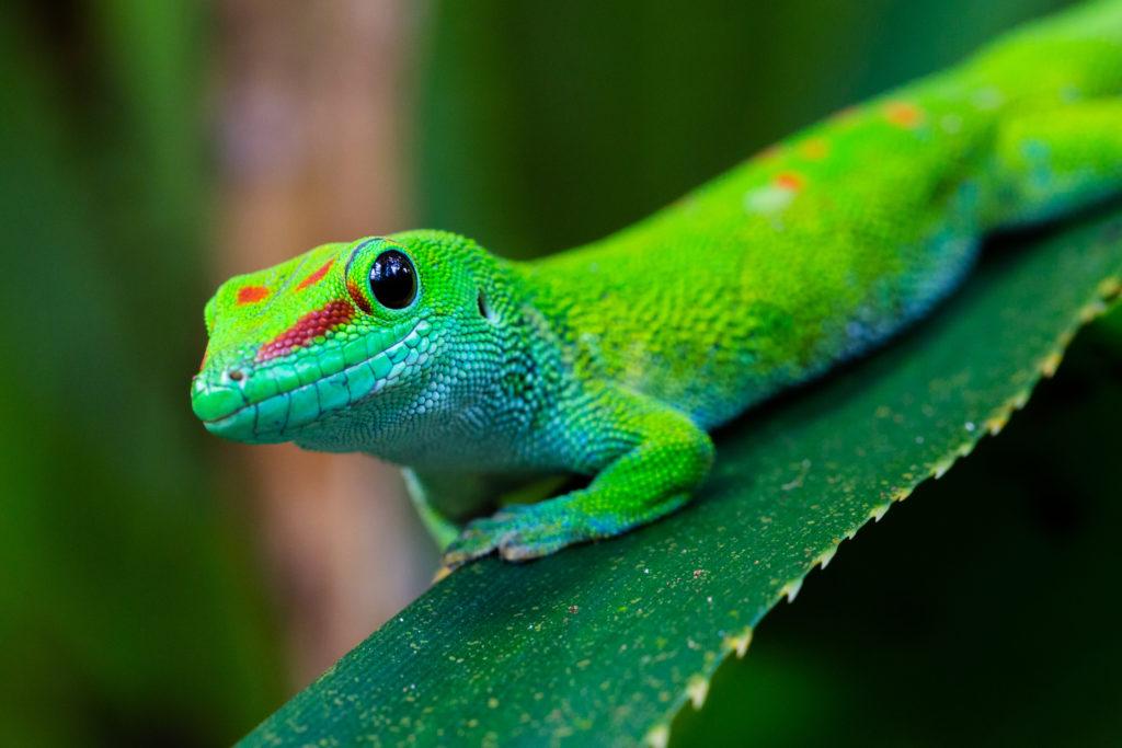 Gecko, Nahrungsergänzungsmittel für Geckos, UWG, Abmahnung, Rechtsmissbrauch, Klagebefugnis